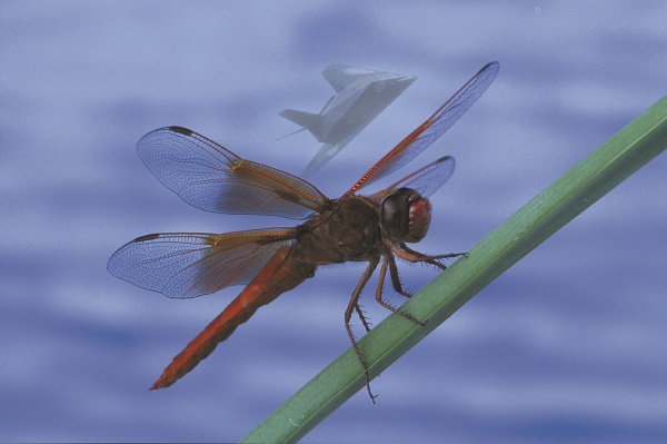 Dragonfly_and_jet