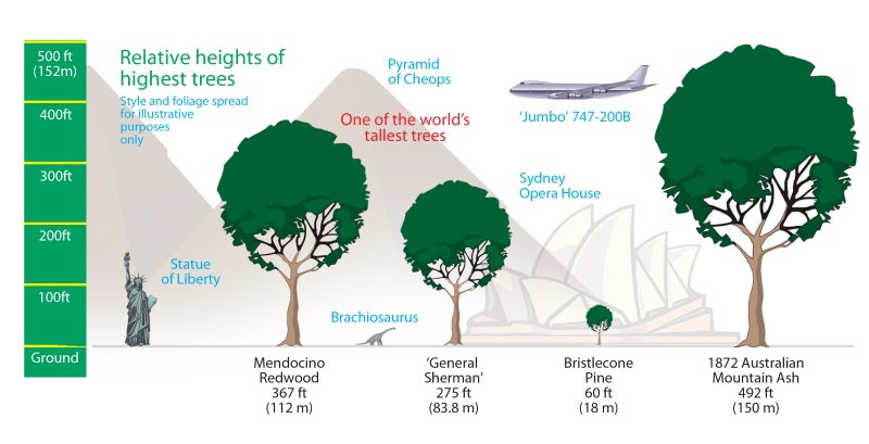 treecomparison