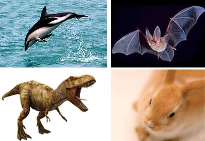 placental-mammals-dinosaur