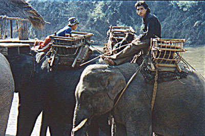elephant-asia