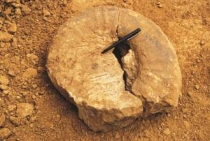 AmmoniteFossilFig4