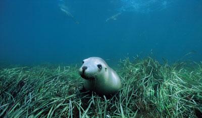cute-seal