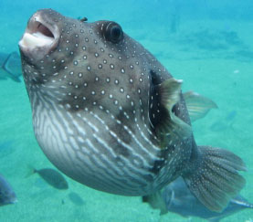 305-fish
