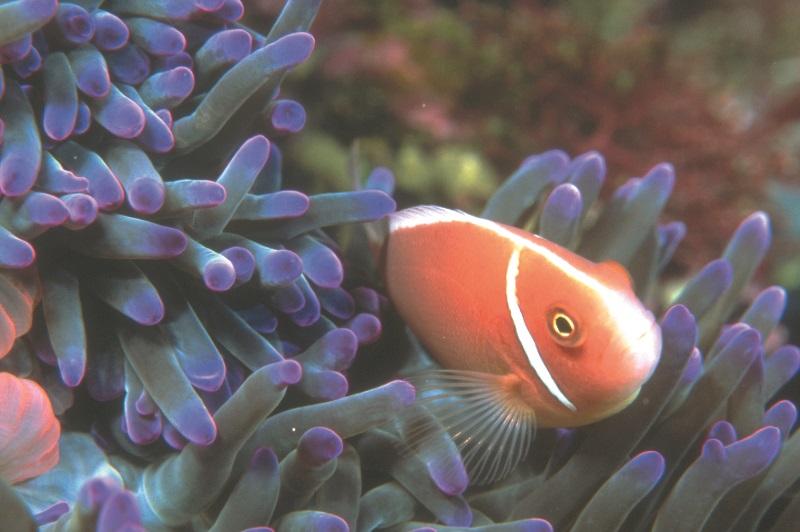 LifeFish