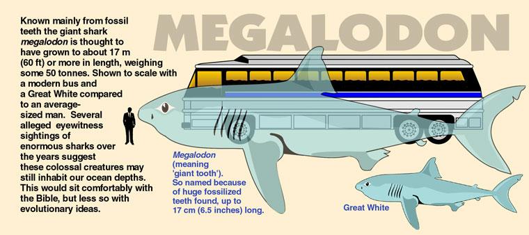 shark-megalodon