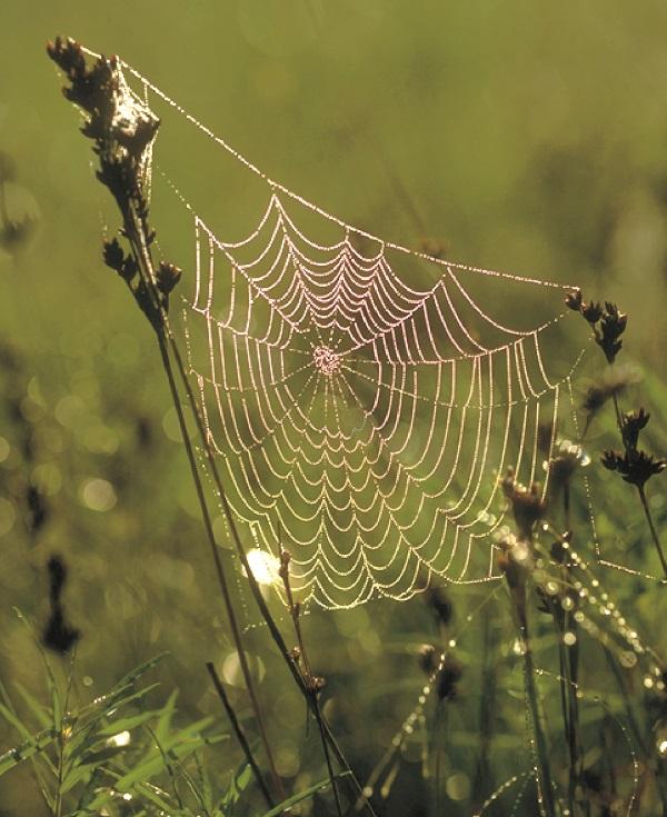 orb-web