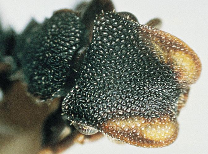 Ants: swarm intelligence - creation com