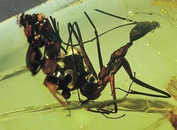 honeypot-ants
