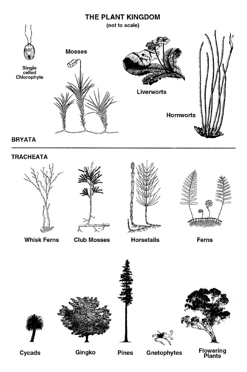 What is a plant is a whole kingdom