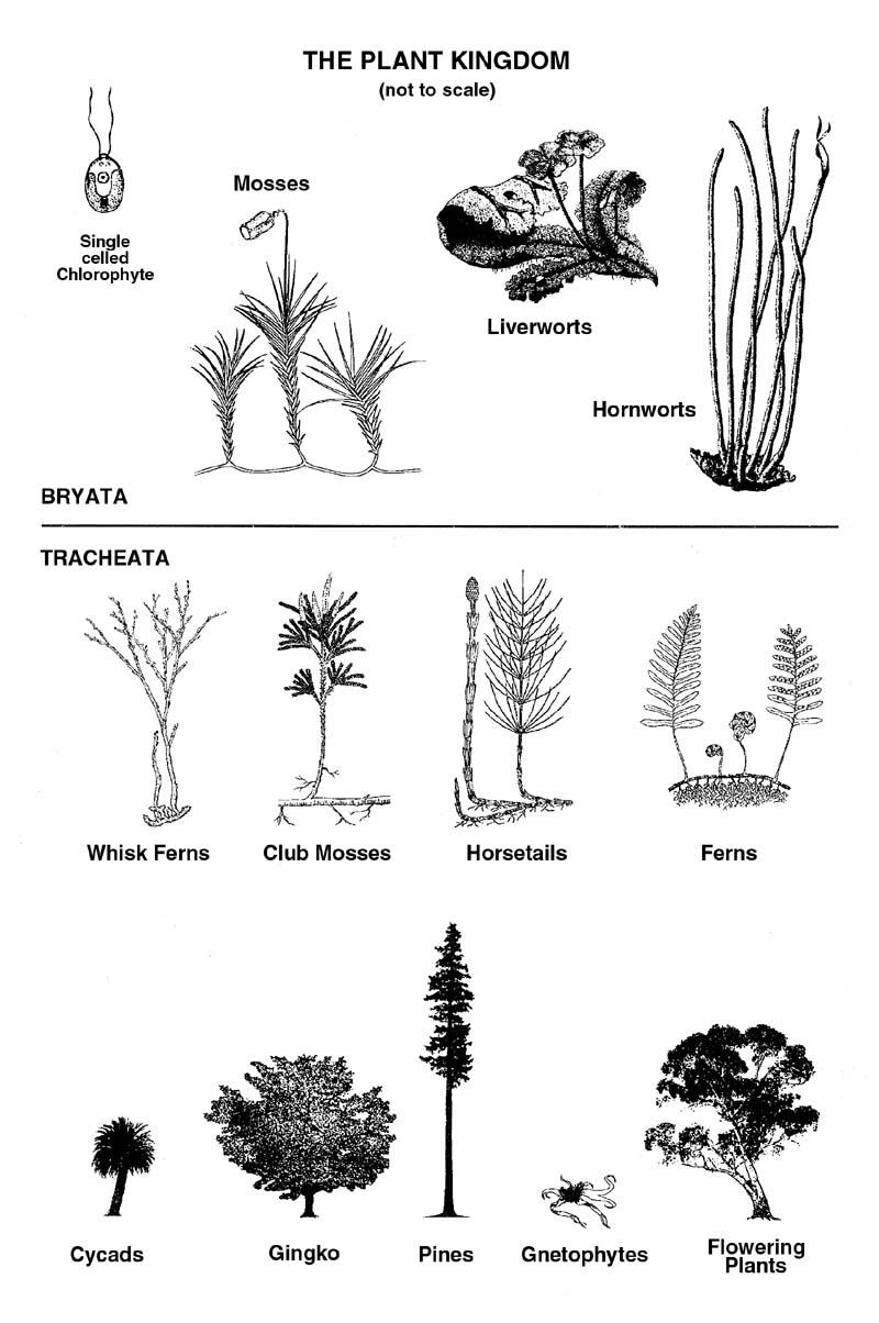 kingdom of the plants  defying evolution