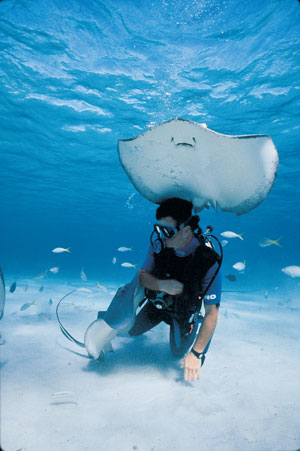 diver-stringray-southern