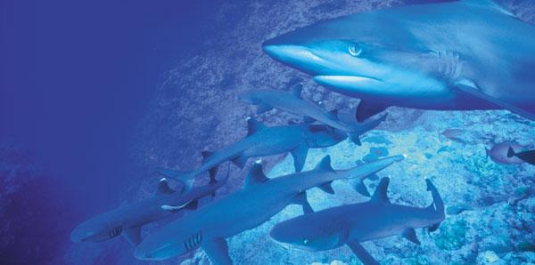 sharkray-composite
