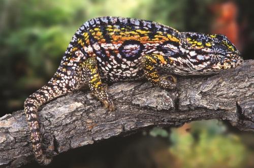ChameleonOnBranch