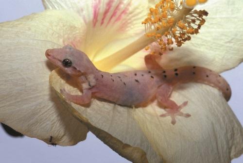 GeckoOnLeaf