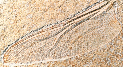 FossilWing