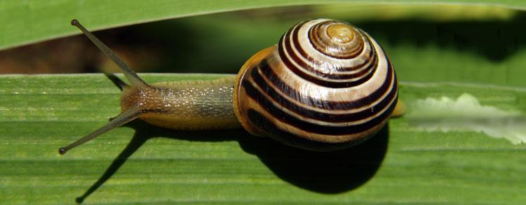 snail-trail