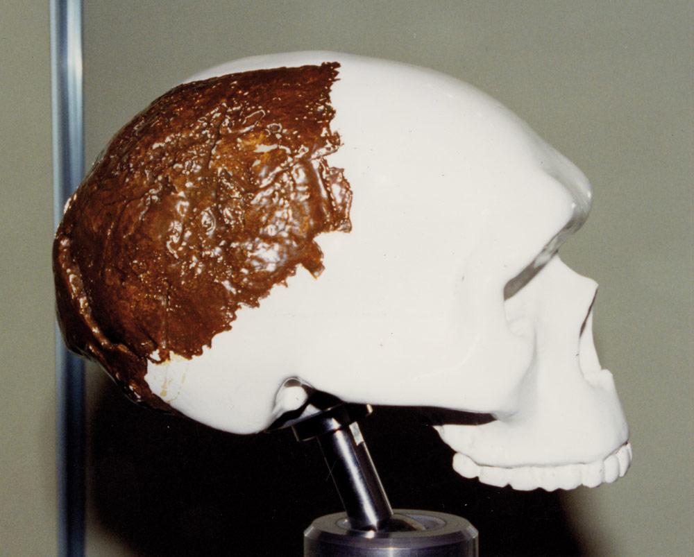 swanscombe-skull-model