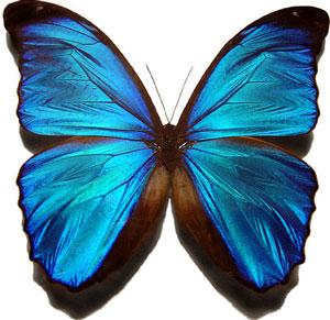 809-butterfly