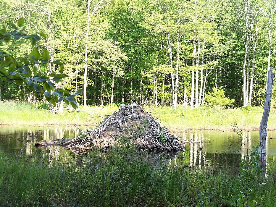 812-beaver-lodge
