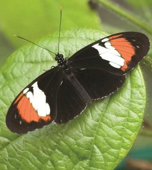 ButterflyOnLeaf