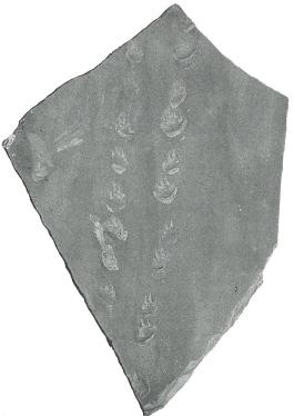 FossilizedQuadrupedTrackway