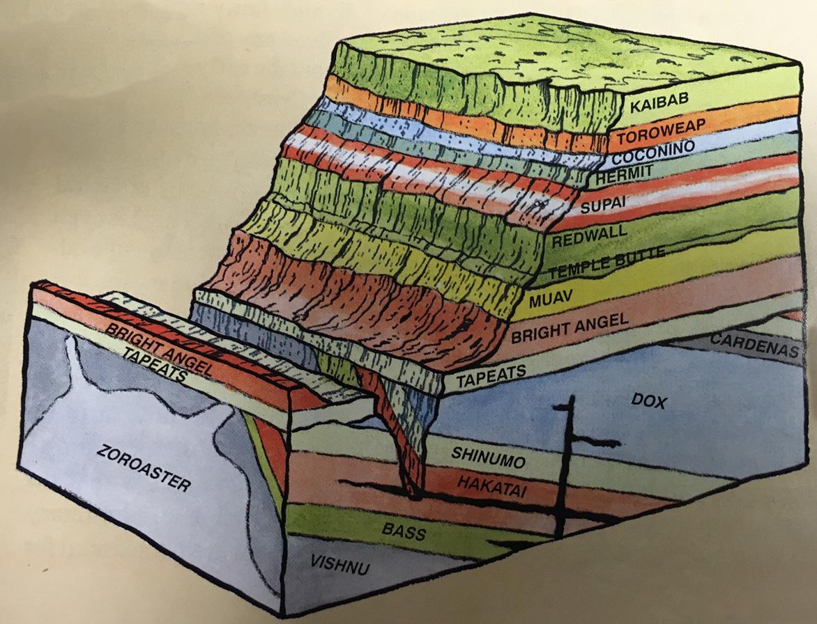 Startling evidence for Noahs Flood - creation com