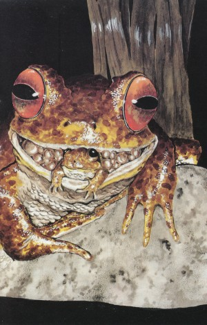 0854-gastric-brooding-frog