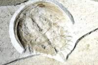 953-ancient-limulus