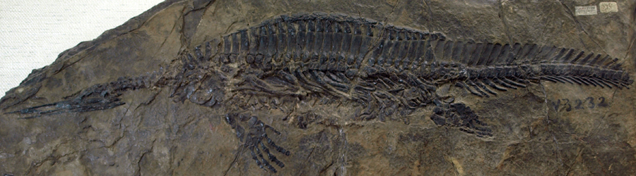 HupehsuchusNanchangensis