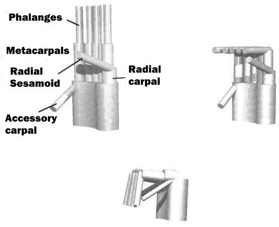 graspingmechanism