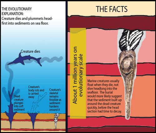 ichthyosaur-facts