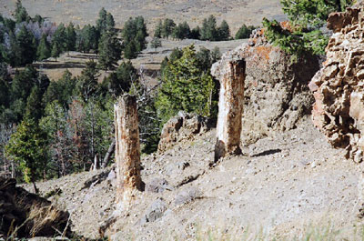 Upright fossilised trees in Yellowstone. Evidence shows they could not have grown in place.