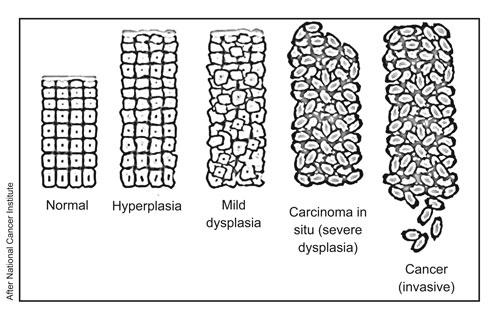 4331-cells
