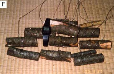 Wood-samples