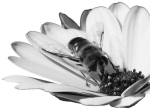 5579-bee