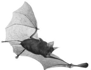 5580-bat