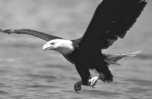 5580-eagle