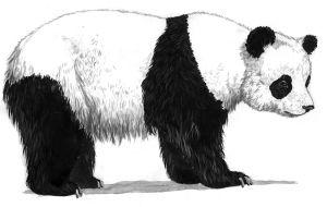 5580-panda