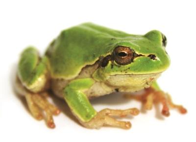 Beautiful Stock.xchng Frog