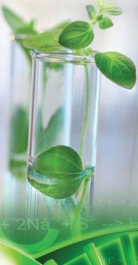 6060-plant