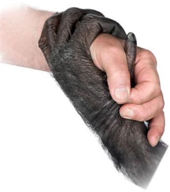 ape human hands