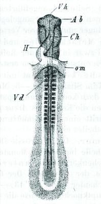 6984-fig5-sm
