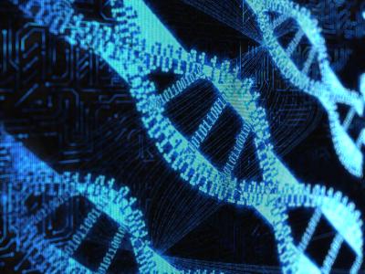xy chromosomes
