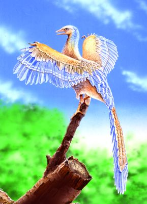 7712-archaeopteryx