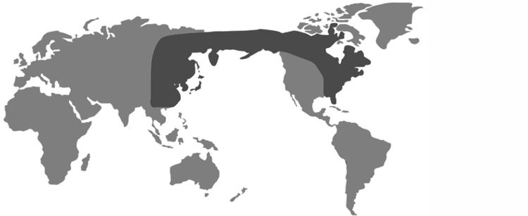 identical-species