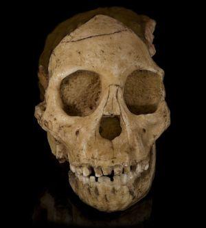 7551-skull