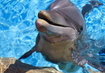 7787-dolphin-2