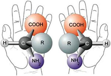 The chirality of typical amino acids