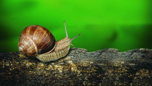 8387-snail