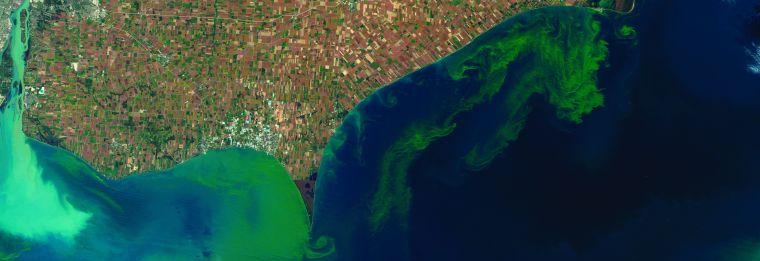 8503-algal-bloom